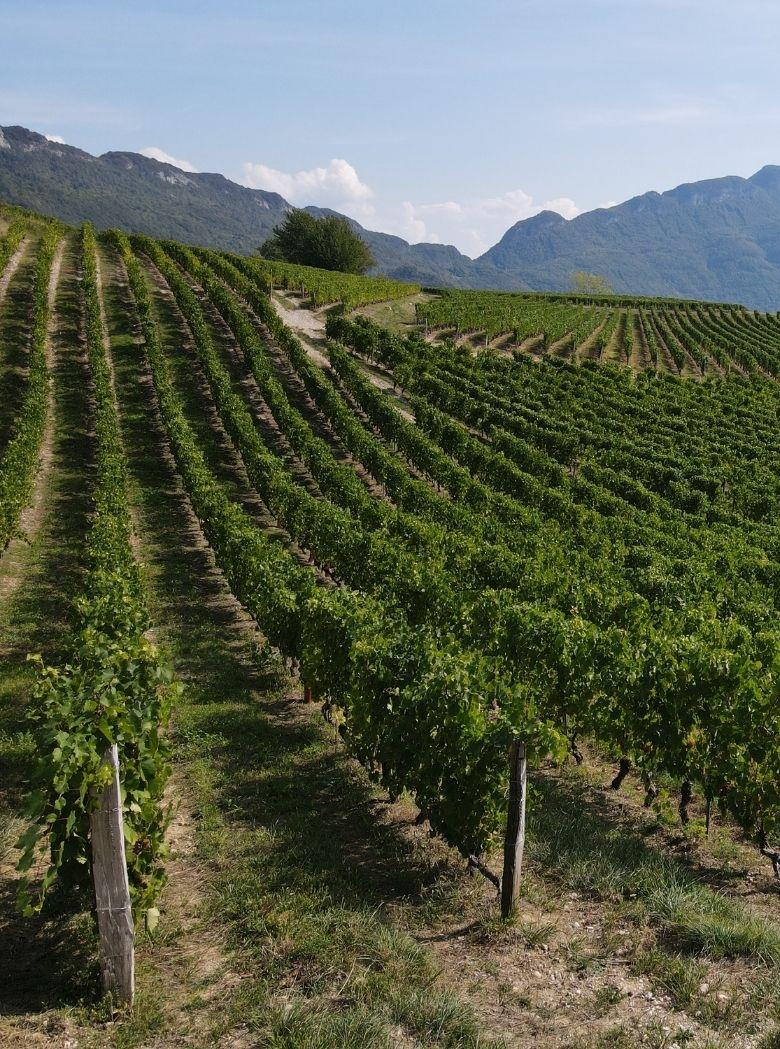 vignes-jongieux
